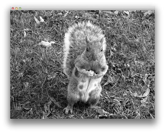 Gray squirell texture over quad