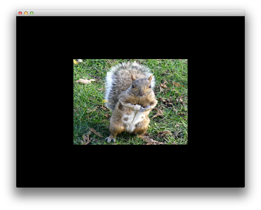 Squirell image distortion